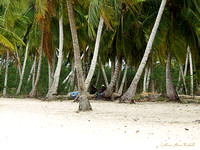 Resting on the Beach - La Romana - Dominican Republic