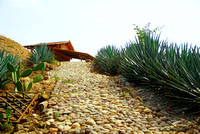 Tequila Plantation in Mexico