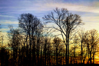 Bare Trees Against the Sunset